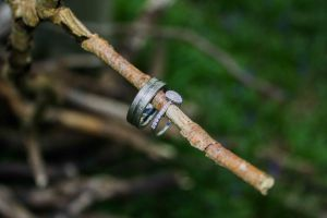 Engagement rings resting on a twig